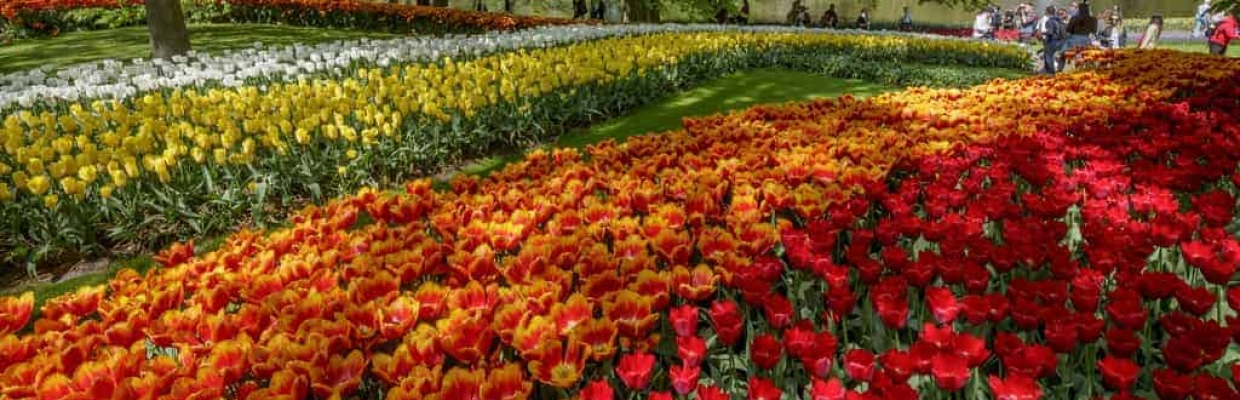 copyright NBTC Holland Marketing Keukenhof 03